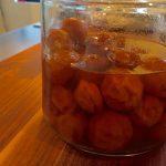 寿梅園さんの梅で梅シロップ作りWS@5/23